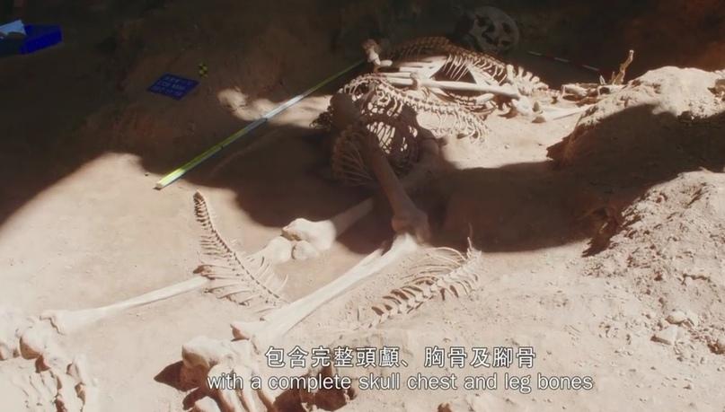 Уникальное открытие гигантского скелета в Таиланде - гиганта, возможно, убитого рогатой змеёй. D5zU8yQV66A