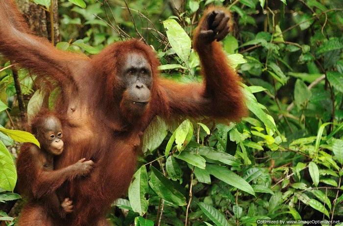 7 природных чудес Юго-Восточной Азии