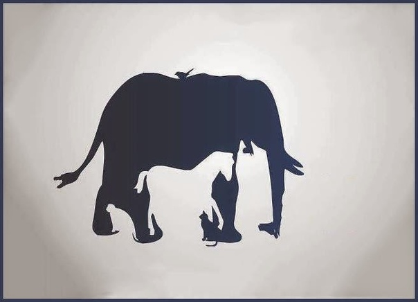 Тест с картинками кто ты в мире животных