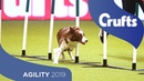 Agility – Crufts Singles Final: Small, Medium and Large | Crufts 2019