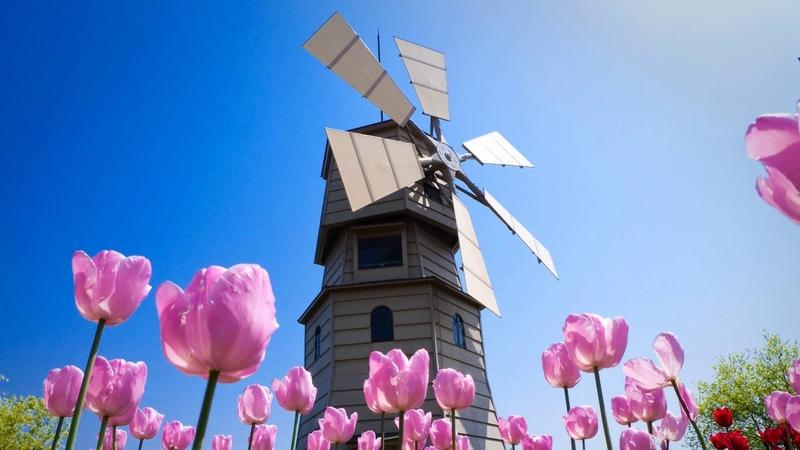Картинка природа Мельница пейзаж тюльпаны небо цветы весна Resim doğası Değirmen peyzaj