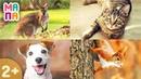 Как говорят животные развивающее видео для малышей Учим звуки животных ВИКТОРИНА для детей