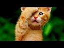 Смешные кошки и собаки Август 2019 Новые приколы с котами, смешные коты 2019 funny cats animals 95