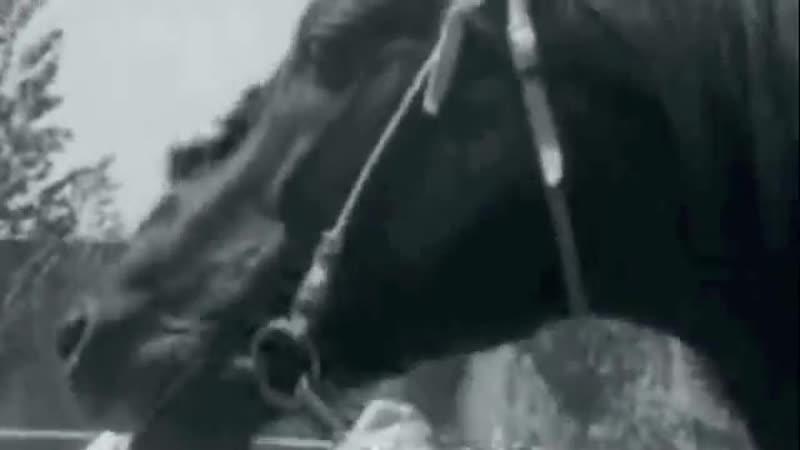 Олимпийская чемпионка Елена Петушкова ее конь Пепел тренер Антон Жагоров и Сальский конный завод