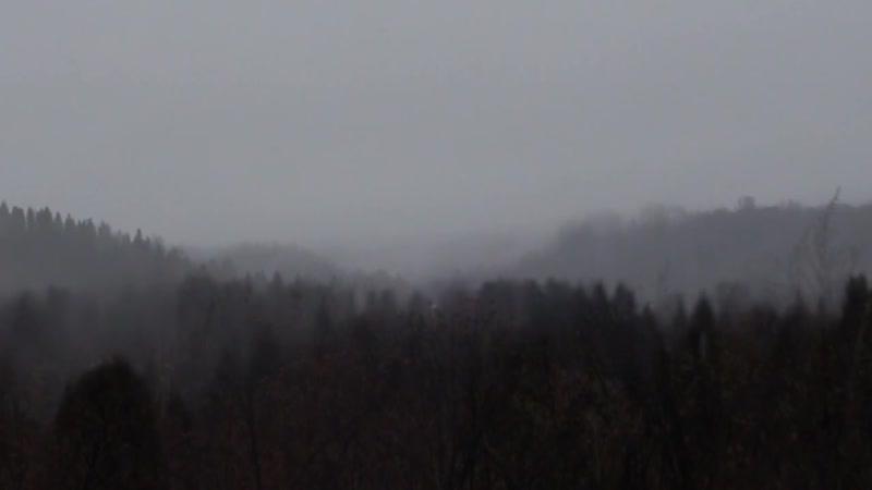 TLFN Dayly noise в Ярославичах