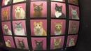 Куда сходить в СПБ? В Котокафе Республика кошек и котов.