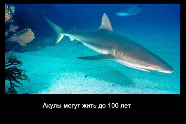 Valteya - Интересные факты о акулах / Хищники морей.(Видео. Фото) - Страница 2 29NeT1-DX_k