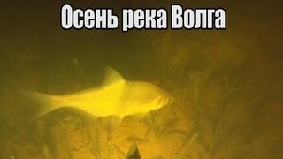🏊♂️Нырнули ночью в Волгу и вот что из этого вышло!😲 Подводная охота Осень