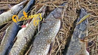 Когда попал на жор щуки, лучшая рыбалка на щуку этого года