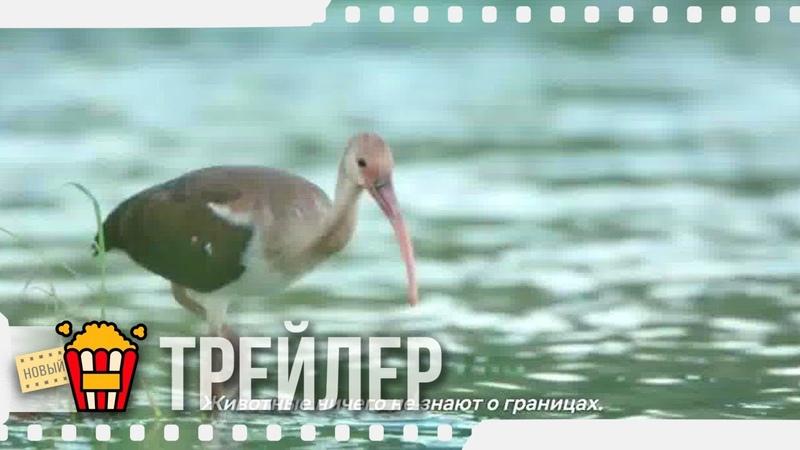 ЗАЩИТНИКИ ПТИЦ Русский трейлер Субтитры 2019 Новые трейлеры