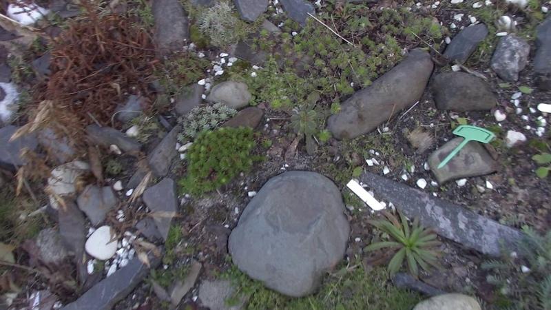Как выглядят альпийские растения на 24 февраля