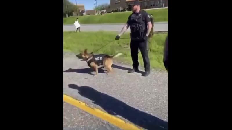 Un nain Antifa crie Nique la Police et montre ses fesses à un chien policier