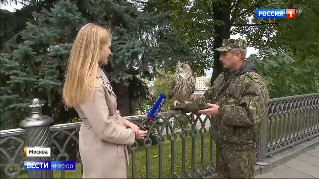Вести в 20:00 • Необычные охранники Кремля: ястребы, соколы и филин борются с воронами