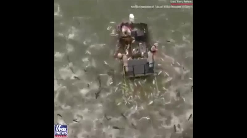 La vid o du jour : Maltraitance animale la pêche lectrique