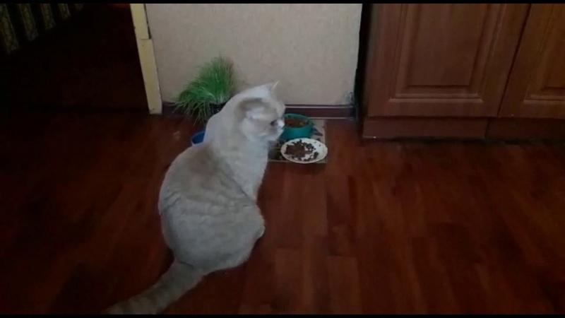 Кот наблюдает за кем-то