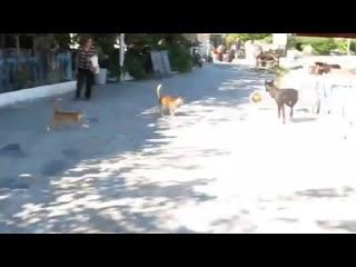 Рыжие коты - это настоящая банда!!!
