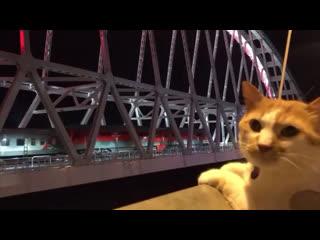 Кот Мостик первым встречает наш долгожданный поезд 😍🤗