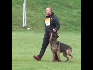 Dog-and-Owner-have-incredible-routine_2.mp4