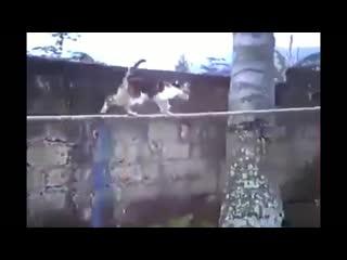 Полоса препятствий. Крутой котэ.