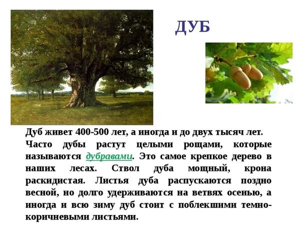 каждом рассказ о дереве с картинками мякинино