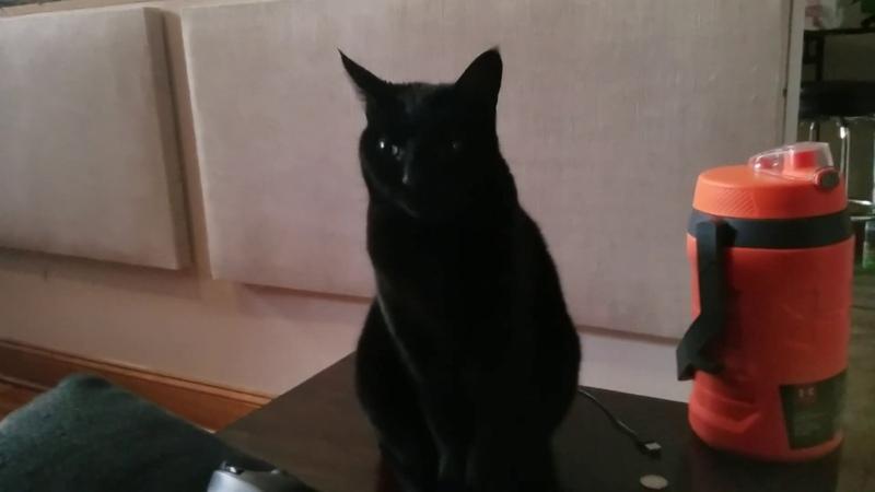 Is Blackberry a classy lady kitten