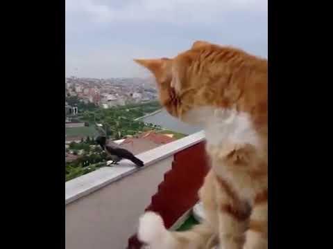 Кот и Ворона переговариваются.