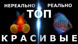 ТОП 60 самых красивых аквариумных рыбок!