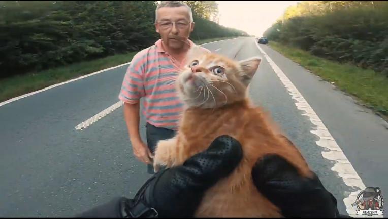 Посмотрите это видео на Rutube Байкер спас котёнка на дороге