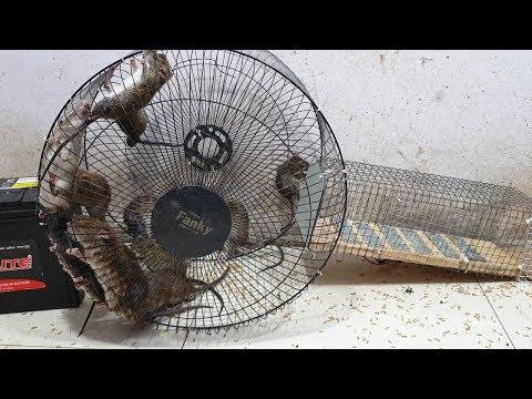 Kipas perangkap tikus atas / perangkap tikus listrik terbaik 12 V dengan rangka kipas