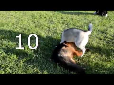 [Урок 10] Подготовка к выходу с собакой в город