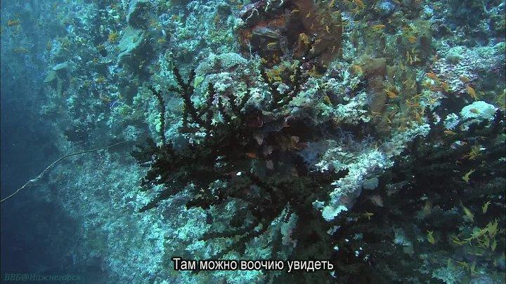 BBC Океаны 6 Прибрежные воды Индийского океана Познавательный природа путешествие 2008