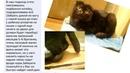 Помощь котёнку с ОХД