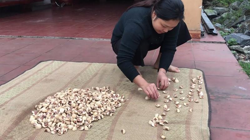 Cách Phơi CAU Cho Bà Ngoại Xinh Gái Không Bị Bung Hạt Areca Nuts