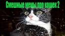 Смешные мемы про кошек 2