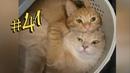 ПРИКОЛЫ С ЖИВОТНЫМИ 😺🐶 Смешные Животные Собаки Смешные Коты Приколы с котами Забавные Животные 41