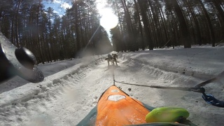 Ездовой спорт зимой На упряжке хаски по лужам