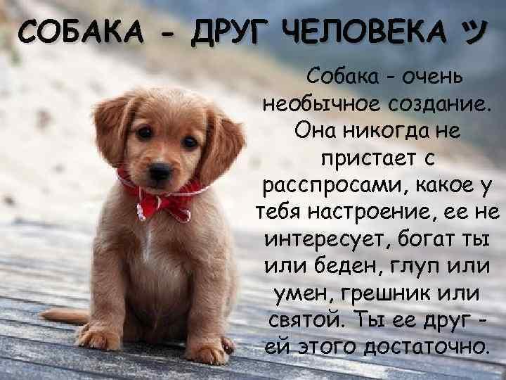 Стихи о собаках в картинках