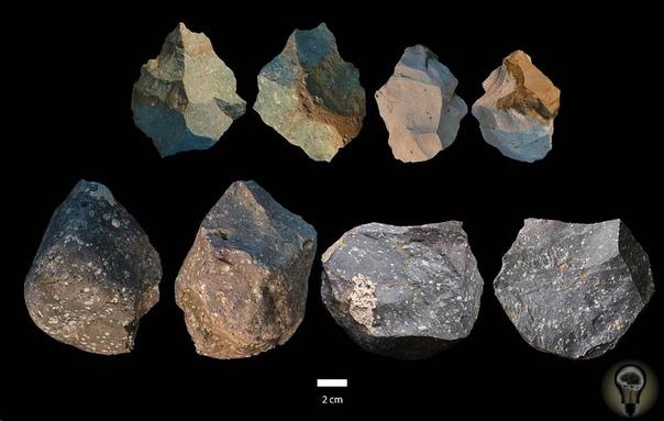 Первые представители Homo erectus умели делать орудия труда разной сложности
