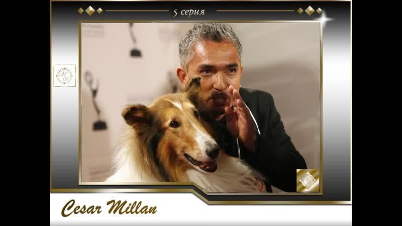 5 серия Сезар Миллан Переводчик с собачьего / Emily