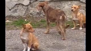 Защита животных в руках неравнодушных людей