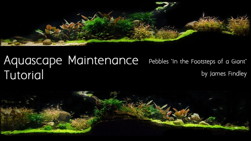 Aquascape Maintenance Tutorial Guide- The Green Machine