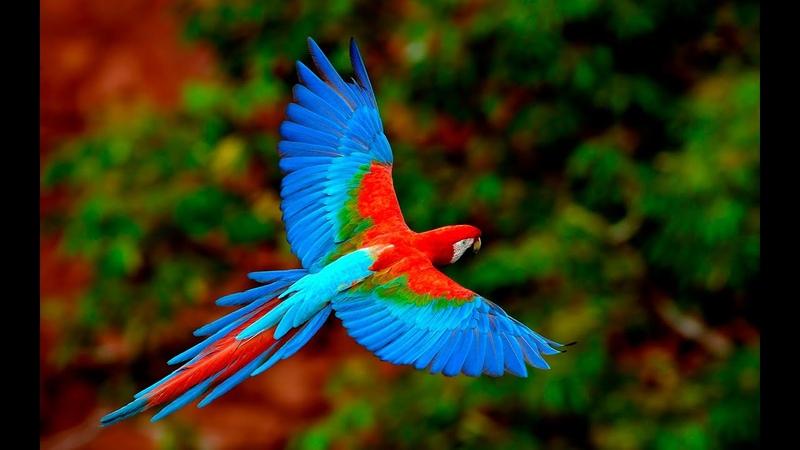 National Geographic Австралия Страна Попугаев документальный фильм 2015