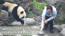 Nanny's Secret Trick To Lure Little Pandas iPanda