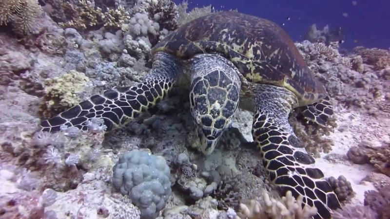 Хургада! Hurghada Aquarium The Sea Life Hotel December 2017 Хургада Аквариум Дахар