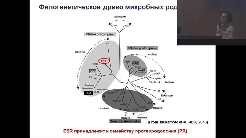Петровская Лада Евгеньевна - Микробные родопсины и оптогенетика