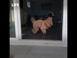 Пёс, который смог