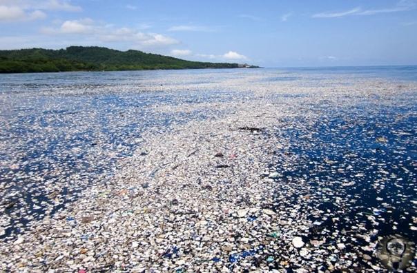 МУСОРНЫЙ ОСТРОВ В ТИХОМ ОКЕАНЕ Большое тихоокеанское мусорное пятно остров, превышающий размерами несколько стран Европы, появился недалеко от Гавайев в конце 80-х годов и с тех пор только