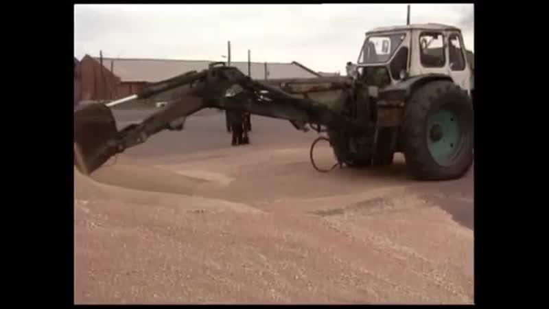 «Сибирская пшеница» Как Ингушетия заняла первое место по растениеводству