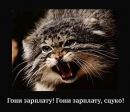 Персональный фотоальбом Евгения Терешкова
