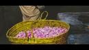 Making of Rose Water in Jabal AlAkhdar صناعة ماء الورد في الجبل الأخضر
